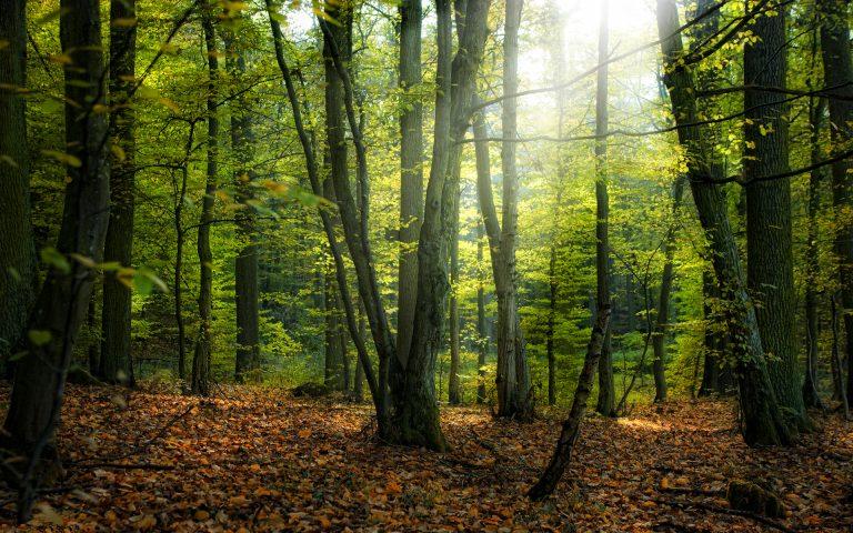 miškotvarkos projektai