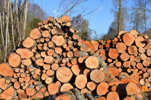 59841262-alder-firewood-log-stack-in-early-spring-Stock-Photo
