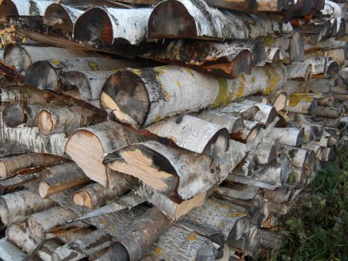 European White Birch Firewood