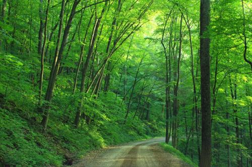 woods-landscape-road-loyalsock-state-forest-163703