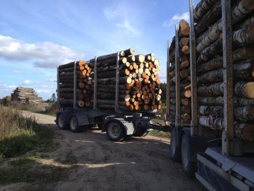 perka-tarine-mediena-Pasvalio