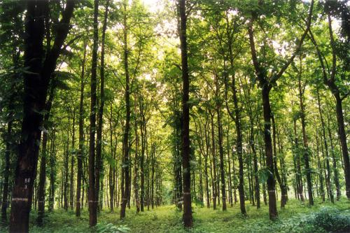 types-of-forest-large